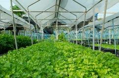 Organicznie warzywa Fotografia Royalty Free