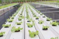 Organicznie warzywa uprawiany organicznie sposób Zdjęcia Royalty Free
