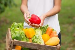 Organicznie warzywo bezpośredni od gospodarstwa rolnego zdjęcie royalty free