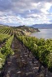 Organicznie winnica wytwórnia win Obrazy Royalty Free