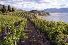 Organicznie winnica wytwórnia win Zdjęcie Royalty Free
