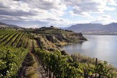 Organicznie winnica wytwórnia win Obraz Royalty Free