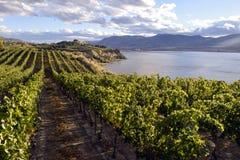 Organicznie winnica wytwórnia win Zdjęcia Stock