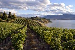 Organicznie winnica wytwórnia win Obrazy Stock