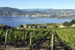 Organicznie winnicy Naramata Okanagan doliny kolumbiowie brytyjska Obraz Stock