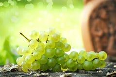 Organicznie winogrona obrazy stock