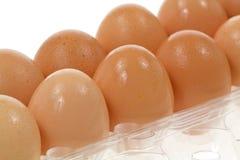 organicznie wszystkie jajka Zdjęcia Royalty Free