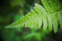 Organicznie wzór paprociowa roślina Fotografia Stock