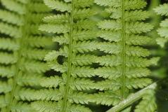 Organicznie wzór paprociowa roślina Fotografia Royalty Free