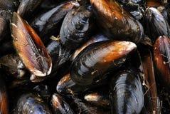 organicznie zamknięty świeży mussel Fotografia Royalty Free