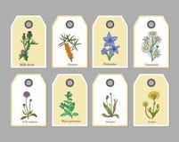 Organicznie ziele etykietki ilustracji