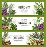 Organicznie ziele i pikantność gospodarstwo rolne wprowadzać na rynek sztandaru set Obraz Stock