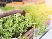 Organicznie zielony warzywo w Koszykowym Zdrowym łasowaniu Zdjęcie Stock