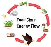 Organigrama de energía de la cadena alimentaria ilustración del vector