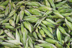 organique frais de maïs Images stock