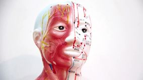 Organisation av människokroppen stock video