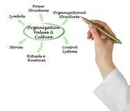 Organisationsvärden & kultur royaltyfri foto