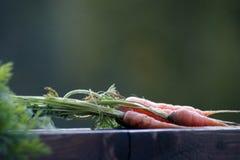 Organisch angebaute Karotte Stockfotos