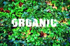 Organisch, Aufschrift vor dem hintergrund der grünen Blätter Dekorativer Aufkleber für Entwurf Stockfotos