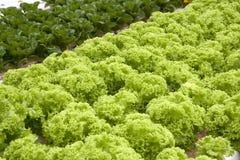 Organisch bewirtschaftetes Gemüse Lizenzfreies Stockbild