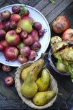 Organisch de winterfruit Stock Afbeeldingen