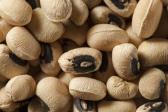 Organisch Droog Black Eyed Peas Stock Afbeelding