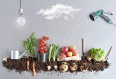 Organisch fruit en moestuinconcept Stock Afbeeldingen