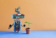 Organisch gegen künstliches anorganisches Konzept Roboter überprüft eine lebende Pflanze in einem Lehmblumentopf Brown-Wandblaubo Lizenzfreies Stockfoto