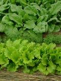 Organisch Greens stock afbeelding