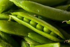 Organisch Groen Sugar Snap Peas Stock Foto's