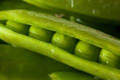 Organisch Groen Sugar Snap Peas Royalty-vrije Stock Foto's