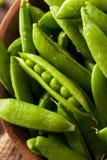 Organisch Groen Sugar Snap Peas Stock Afbeeldingen