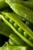 Organisch Groen Sugar Snap Peas Royalty-vrije Stock Afbeelding
