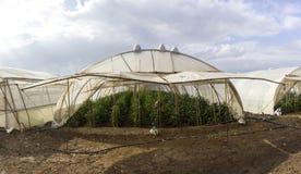 Organisch hydroponic plantaardig cultuurlandbouwbedrijf bij platteland, de vallei van Jordanië Royalty-vrije Stock Afbeeldingen