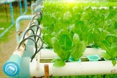 Organisch hydroponic plantaardig cultuurlandbouwbedrijf bij platteland, Thailand Royalty-vrije Stock Afbeelding