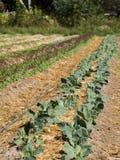 Organisch landbouwbedrijf royalty-vrije stock afbeelding