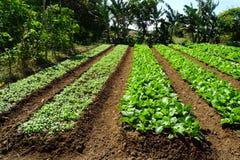 Organisch landbouwbedrijf stock foto