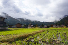 Organisch padieveld in het dorpsgebied Royalty-vrije Stock Afbeelding