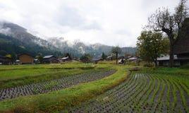 Organisch padieveld in het dorpsgebied Stock Fotografie