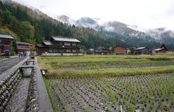 Organisch padieveld in het dorpsgebied Stock Afbeelding