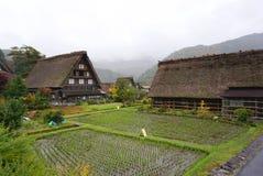 Organisch padieveld in het gebied van het shirakawagodorp Stock Afbeelding