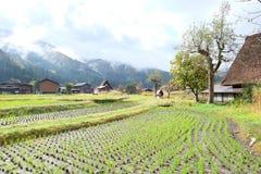 Organisch padieveld in het gebied van het shirakawagodorp Stock Foto's