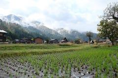 Organisch padieveld in het gebied van het shirakawagodorp Royalty-vrije Stock Foto