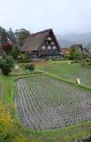 Organisch padieveld in het gebied van het shirakawagodorp Royalty-vrije Stock Foto's