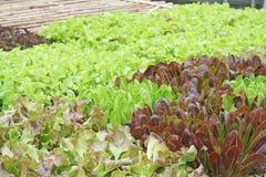 Organisch plantaardig landbouwbedrijf royalty-vrije stock foto