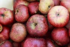 Organisch Rood Johnny Apples in een plastic emmer Royalty-vrije Stock Foto's