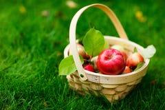 Organische Äpfel in einem Korb lizenzfreie stockfotografie