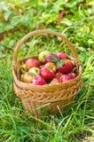 Organische Äpfel im Korb lizenzfreie stockfotos