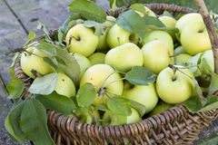 Organische Äpfel im Rahmen stockbilder