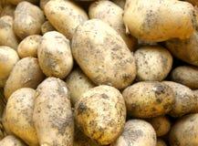 Organische Aardappels   royalty-vrije stock afbeeldingen